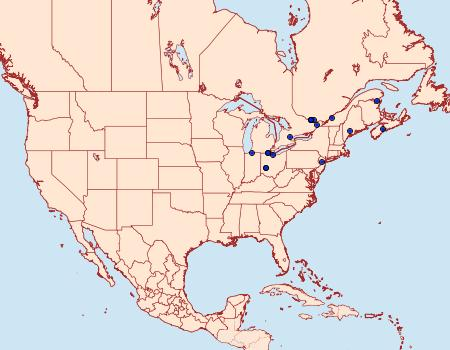Distribution Data for Coleophora intermediella