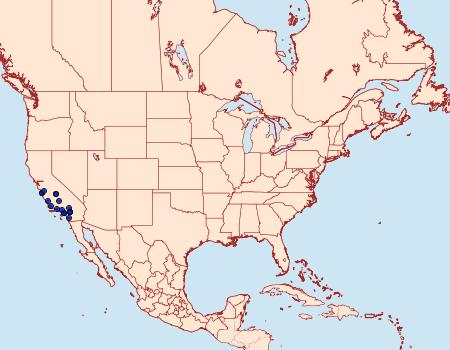 Distribution Data for Tegeticula maculata