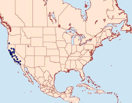 Distribution Data for Dyseriocrania auricyanea