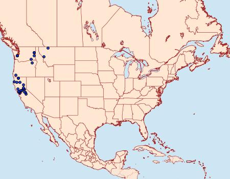 Distribution Data for Nedra stewarti